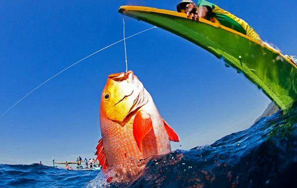 قیمت لوازم ماهیگیری در بازار