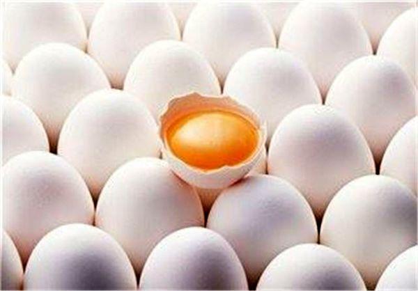 هر عدد تخم مرغ چند؟ /درج قیمت الزامی شد