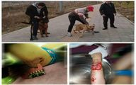 توضیحات پلیس درباره حمله دو سگ به یک کودک در لواسان