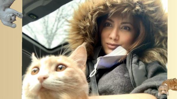 گربه متعجب سمیرا حسینی + عکس