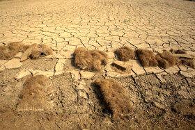به علت نوسانات جوی و افزایش دمای هوا و همچنین کاسته شدن نزولات آسمانی و در پی آن نبودن آب جهت ادامه مراحل کشت برنج، کشاورز خزانه شالی را در زمین کشاورزی رها کرده است.