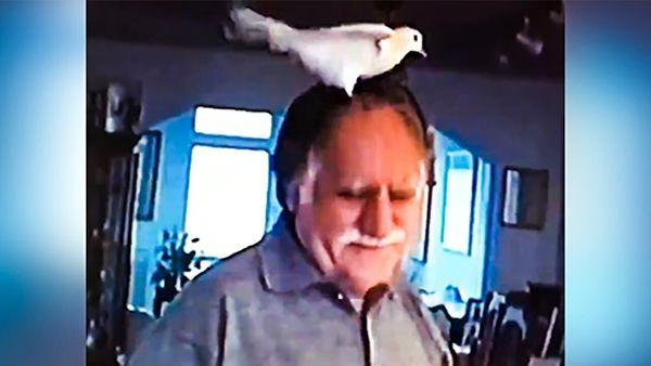 ابراز علاقه جالب یک پرنده به فرشچیان+ فیلم