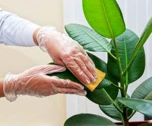 علت پژمرده شدن گیاهان آپارتمانی