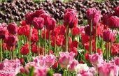 رنگ و بوی بهار در باغ گیاهشناسی ملی