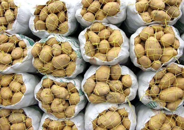 کشاورزان برای رفع ممنوعیت صادرات درخواست دادند