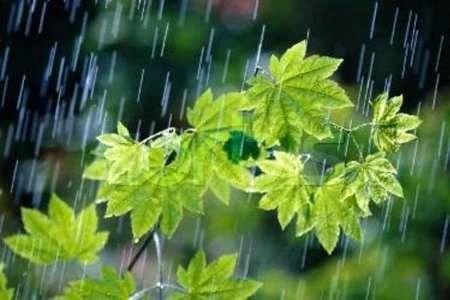 بارش باران جان تازه ای به مزارع کشاورزی کرمانشاه داد