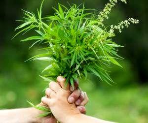 گیاه دارویی که میتوانید در خانه پرورش دهید + فواید